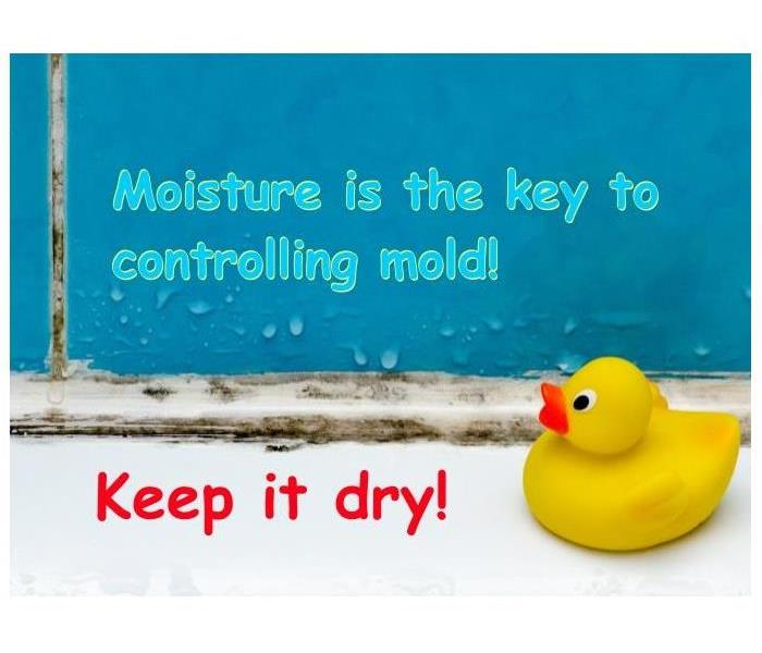Mold Remediation Summer Showers Bring Green Grass & Flowers....AND MOLD!