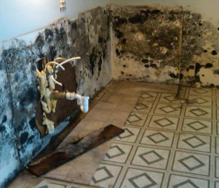 Mold Remediation  Glenview Residents:  Follow These Mold Safety Tips If You Suspect Mold